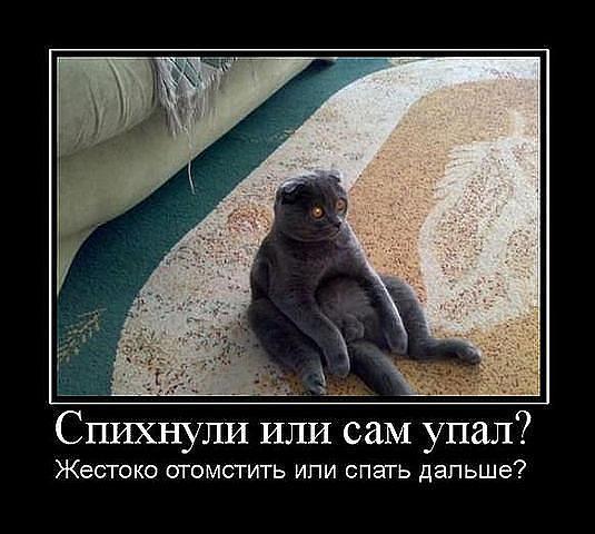 http://s2.uploads.ru/0VBSR.jpg