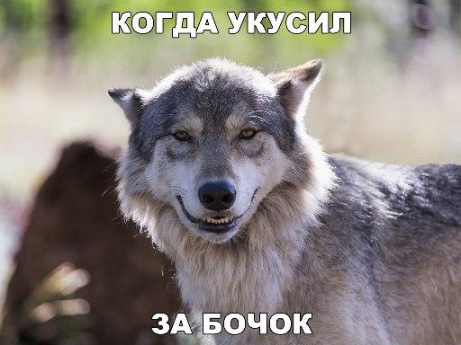 http://s2.uploads.ru/0vEqr.jpg