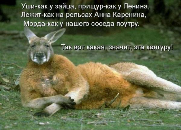 http://s2.uploads.ru/19SrV.jpg