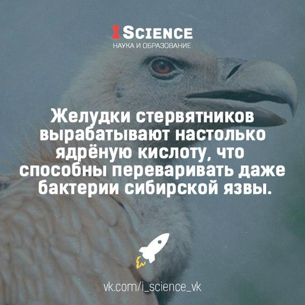 http://s2.uploads.ru/1e3fu.jpg