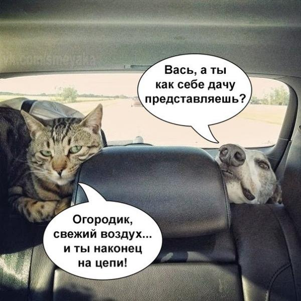 http://s2.uploads.ru/2QZBw.jpg