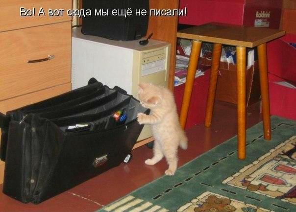 http://s2.uploads.ru/3OxC2.jpg