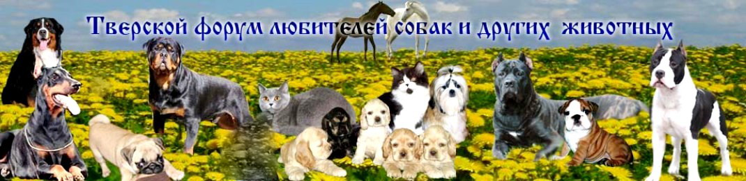 Тверской форум любителей собак и других животных