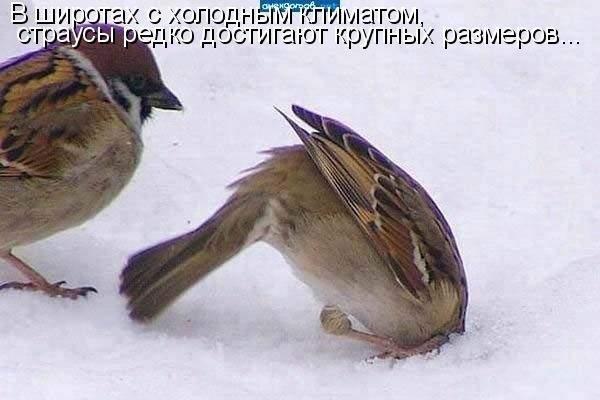 http://s2.uploads.ru/6hlqz.jpg