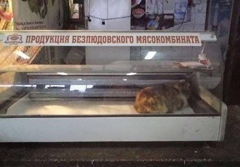 http://s2.uploads.ru/8DTeR.jpg