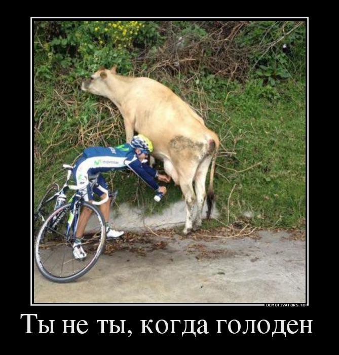 http://s2.uploads.ru/8srQx.jpg