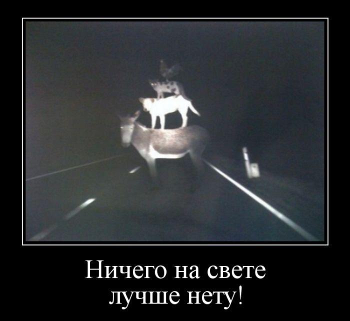 http://s2.uploads.ru/9BWjx.jpg