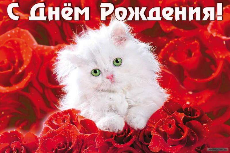 http://s2.uploads.ru/A8e5r.jpg