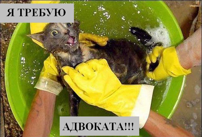 http://s2.uploads.ru/ACvlt.jpg