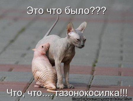 http://s2.uploads.ru/AdECM.jpg