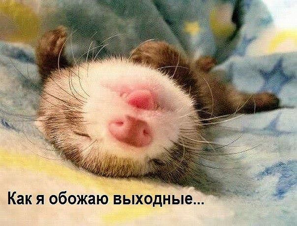 http://s2.uploads.ru/BnRXH.jpg