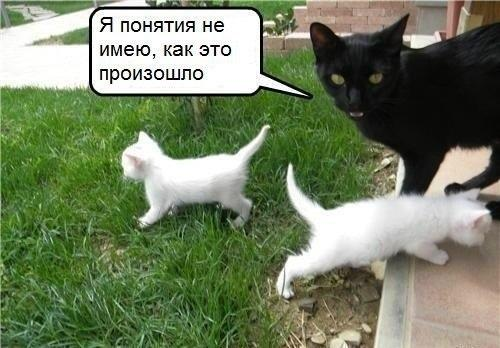 http://s2.uploads.ru/DWqAO.jpg