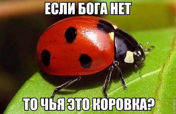 http://s2.uploads.ru/DcP30.jpg