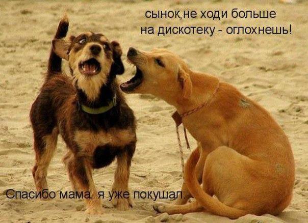 http://s2.uploads.ru/F9to5.jpg