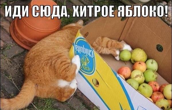 http://s2.uploads.ru/FxmYP.jpg