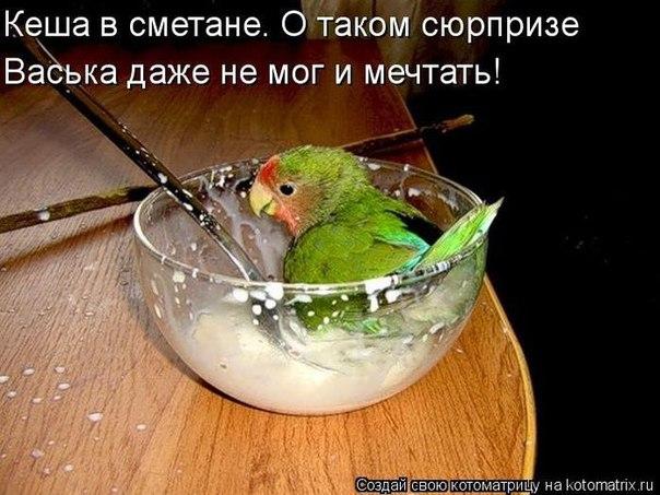 http://s2.uploads.ru/G6MbU.jpg
