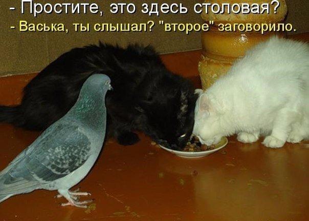 http://s2.uploads.ru/HDBpR.jpg