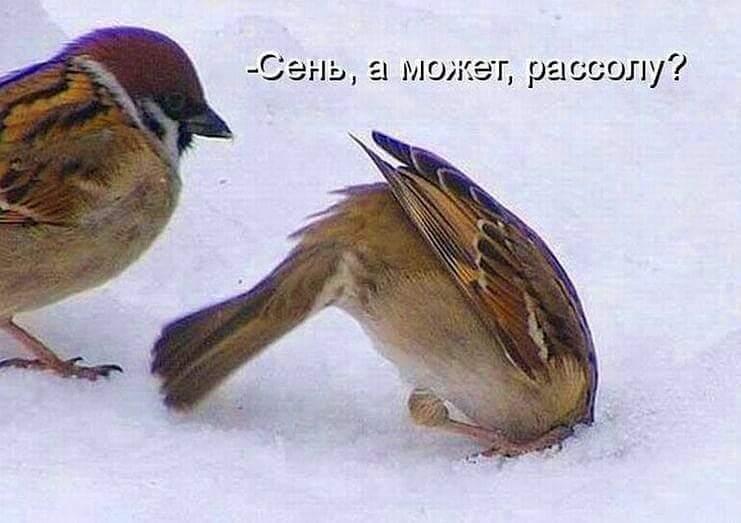 http://s2.uploads.ru/HYQZl.jpg