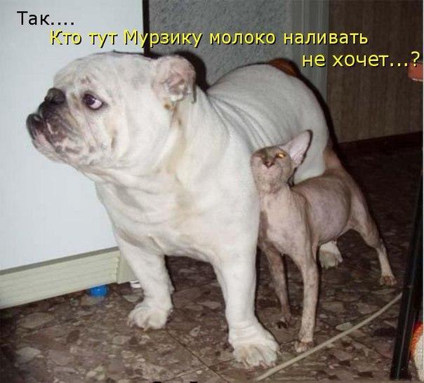 http://s2.uploads.ru/I6bVr.jpg