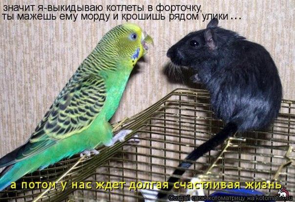 http://s2.uploads.ru/IzJmA.jpg
