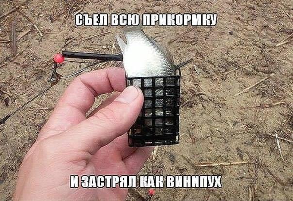http://s2.uploads.ru/Kvsn4.jpg