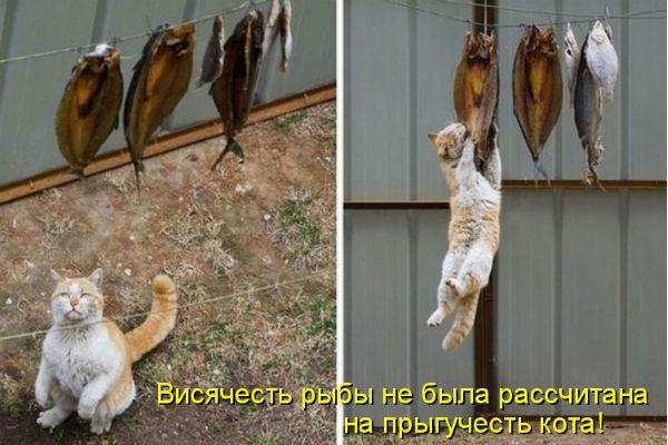 http://s2.uploads.ru/L8vVE.jpg