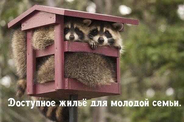 http://s2.uploads.ru/LKVWd.jpg