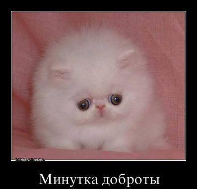 http://s2.uploads.ru/Nbk3s.jpg