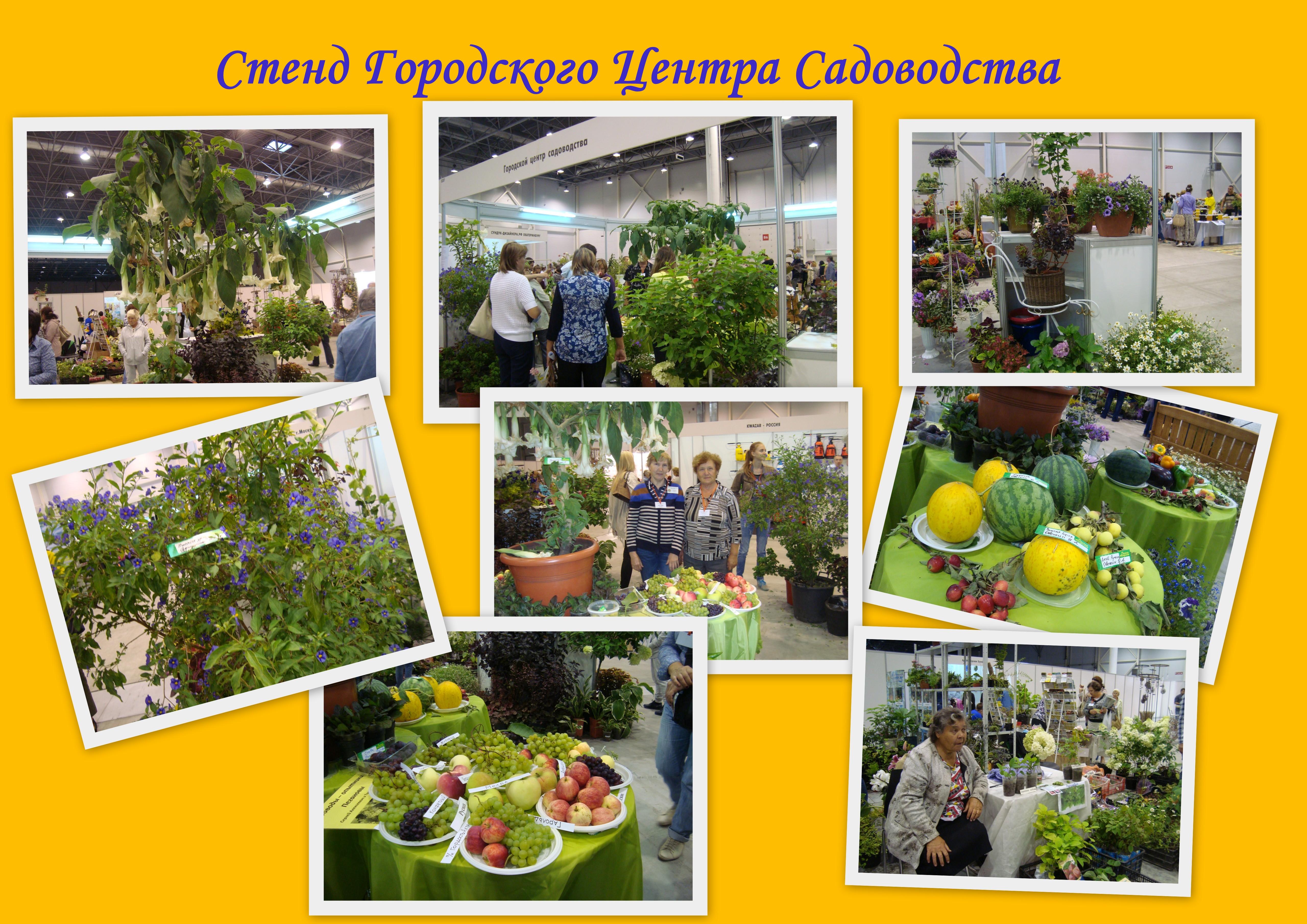 http://s2.uploads.ru/O4fvK.jpg