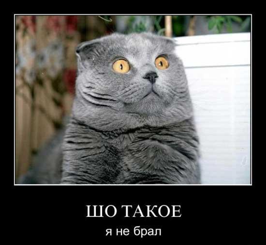 http://s2.uploads.ru/OqQ0x.jpg