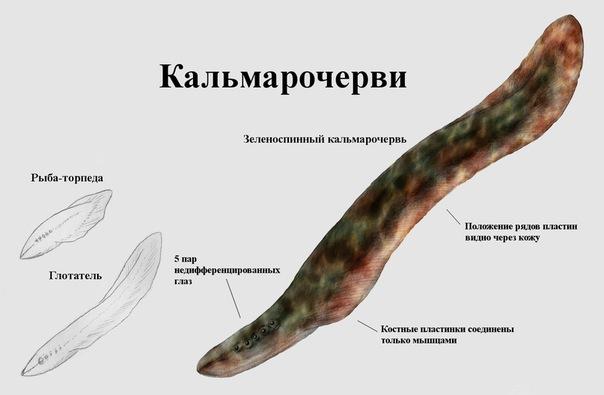 http://s2.uploads.ru/OskqA.jpg