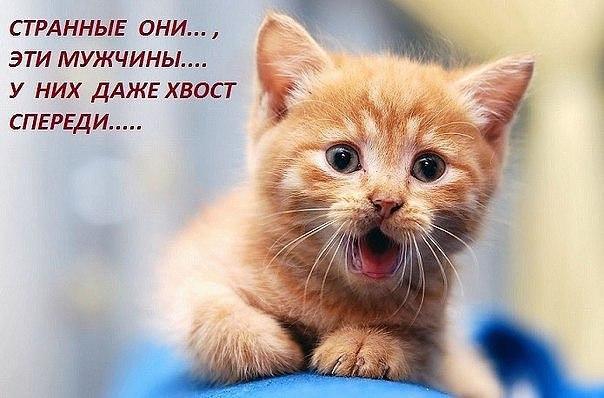 http://s2.uploads.ru/PDXyR.jpg