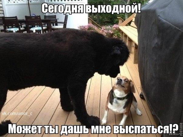 http://s2.uploads.ru/QEaU3.jpg