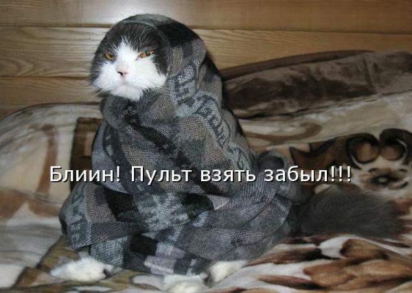 http://s2.uploads.ru/Qgne4.jpg