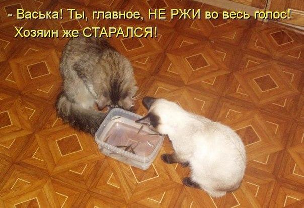 http://s2.uploads.ru/Rkg05.jpg