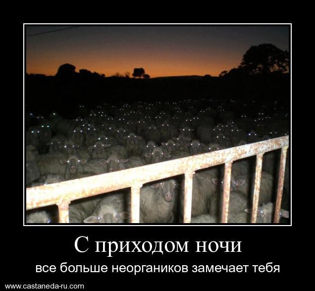 http://s2.uploads.ru/UmvGo.jpg
