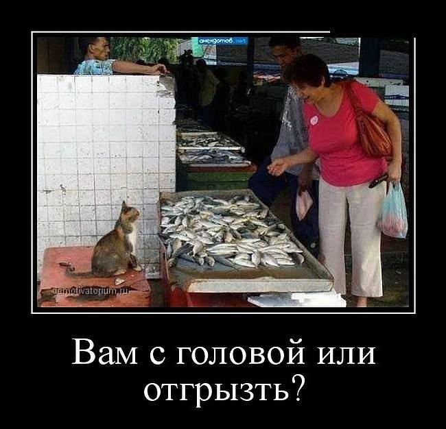 http://s2.uploads.ru/VRzTE.jpg