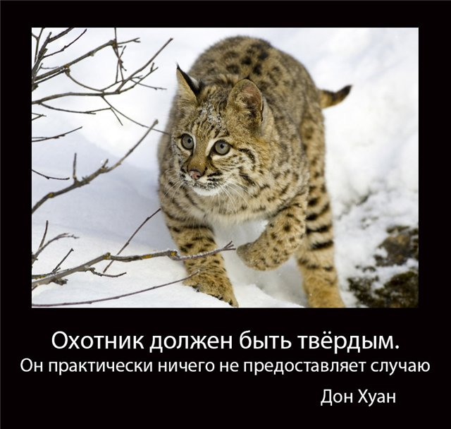 http://s2.uploads.ru/Vmn3X.jpg