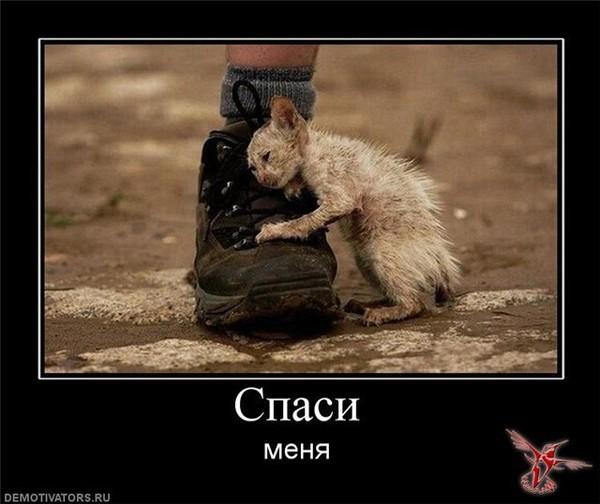 http://s2.uploads.ru/XjDKx.jpg