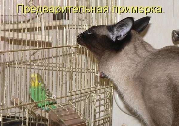 http://s2.uploads.ru/XjofM.jpg