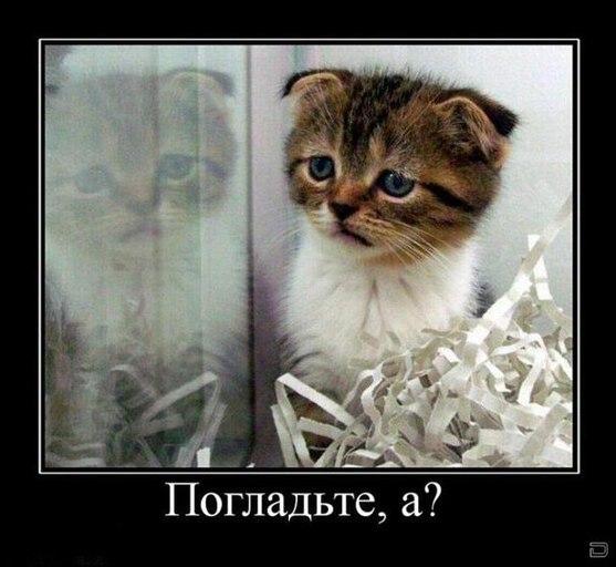 http://s2.uploads.ru/ZcJh7.jpg