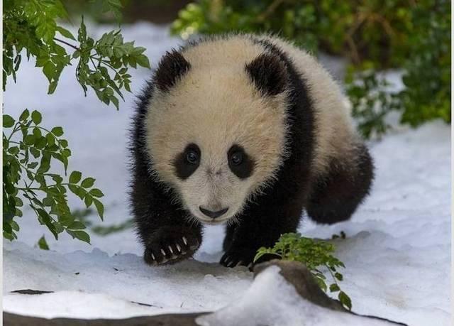 Наглая белка, панда, и песик