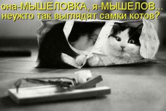 http://s2.uploads.ru/bTSXy.jpg