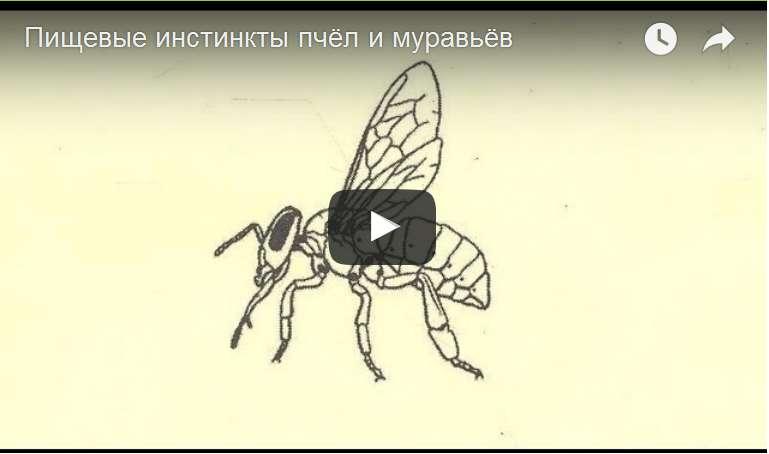 http://s2.uploads.ru/d/fTYhq.jpg