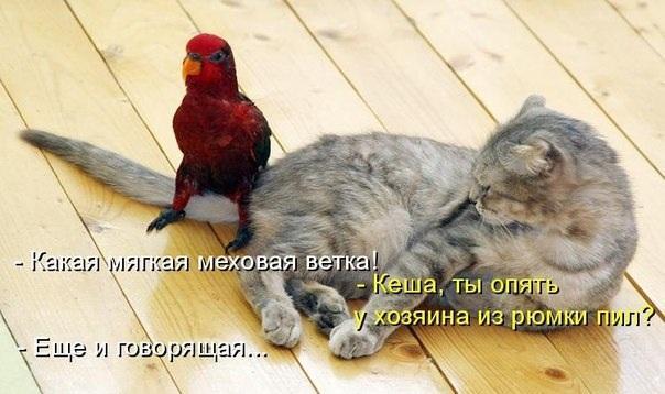 http://s2.uploads.ru/dxRrF.jpg