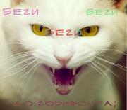 http://s2.uploads.ru/fL0C3.jpg