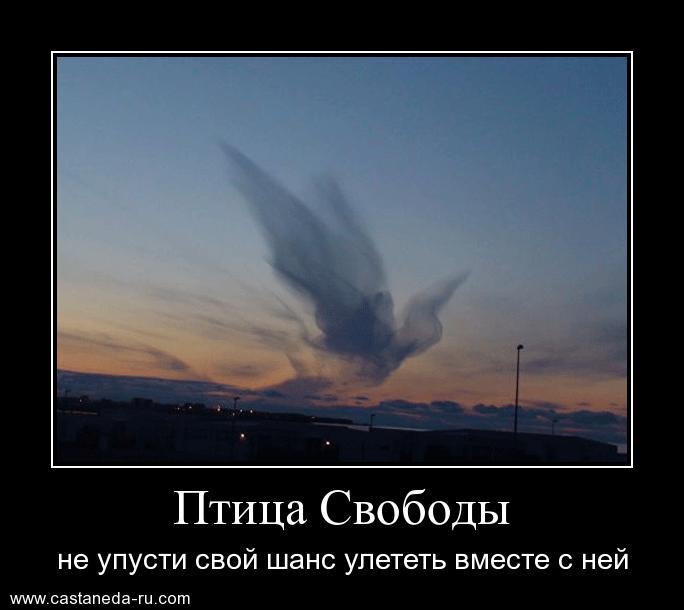 http://s2.uploads.ru/fvFQb.jpg