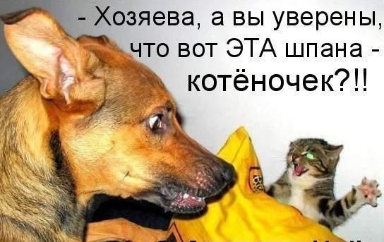 http://s2.uploads.ru/iX1vk.jpg