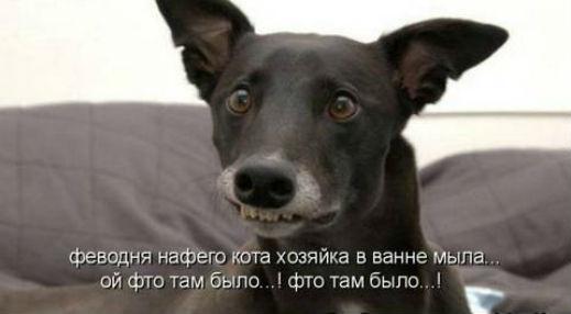 http://s2.uploads.ru/jmhWP.jpg