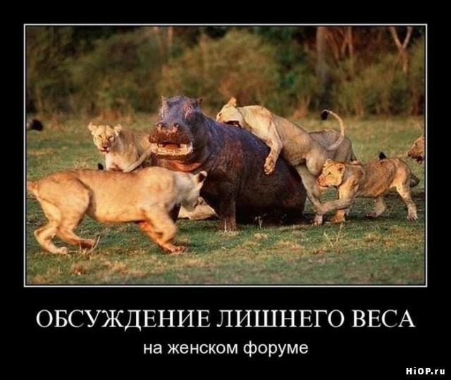 http://s2.uploads.ru/pOmyF.jpg